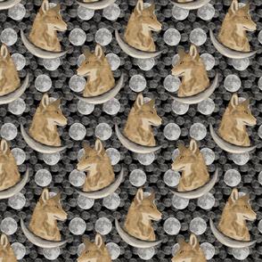 Coyote in moon portraits