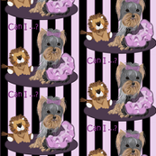 Yorkie - Lila loves Lilac & Lions