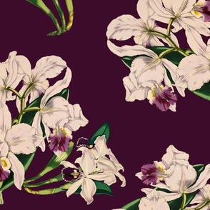 White Orchids On Purple