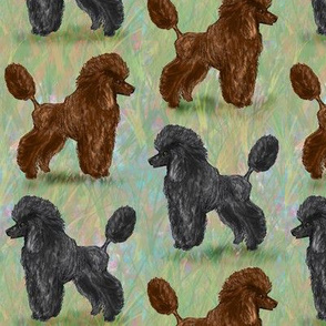 Custom Chocolate Brown and Black Poodle on Pastels