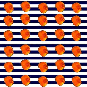 Poppy Stripes