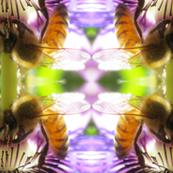 Photo Print Bee