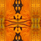 Butterfly Wing Detail Photo Print