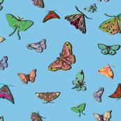 Moths_blue