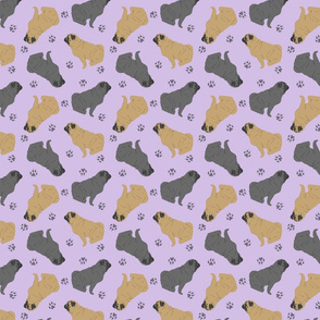 Tiny Pugs - purple