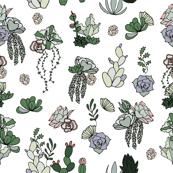 Hand Drawn Succulents