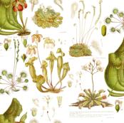 Carnivorous Plants - white