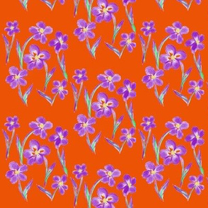 Dainty Meadow Flowers on Fields of Tangerine