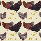 Happy Chicken Family