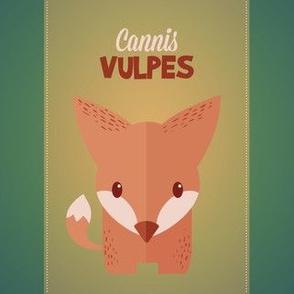 Latin Fox