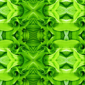 Corn Lily Greenery