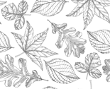 Pen_and_ink_leaves_small_thumb