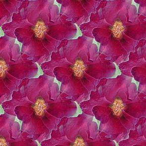 GIMP_SSD_pink_rose_reversed_magenta_neon_edges_IMG_1496