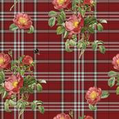 Wild Rose Tartan