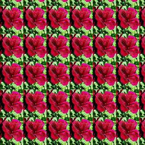 300 petunia