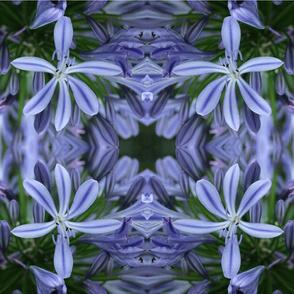agapanthus_tea_towel