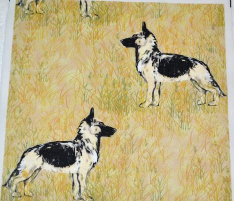 German Shepherd Dogs in Beige Field