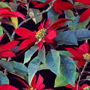 Vivid Red Poinsettia Christmas Flowers - large