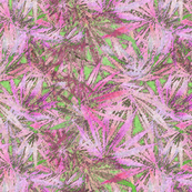Pink & Green Sativa