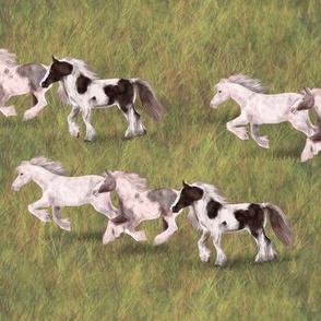 Three Gypsy Vanner Horses