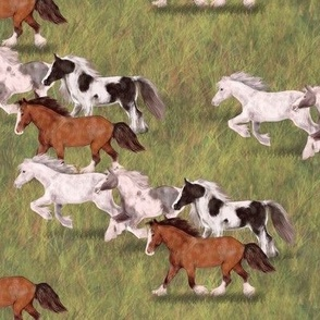 Four Gypsy Vanner Horses