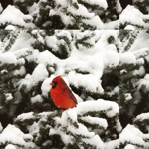 red bird in winter