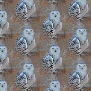 hedwig, the snowy owl - big