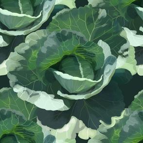 Ruffled Cabbage Head