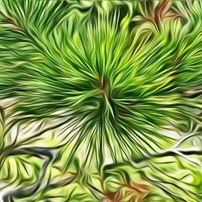 silver mountain pine