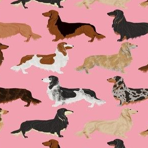 doxie dog dachshunds long haired dachshunds dogs weiner dogs weenie dogs cute pets