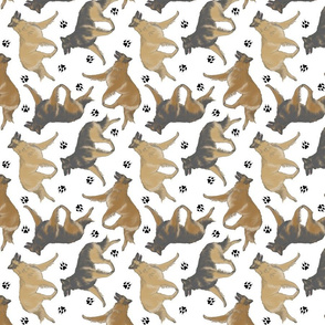 Trotting Belgian Tervuren and paw prints - white