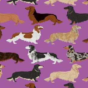 dachshunds long haired doxie dog pet dog cute dog fabric