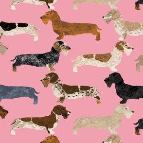 wire haired dachshunds dogs pet dog cute pets pink