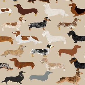doxie dachshunds dogs pet dog fabric doxie fabric wiener dog crafts cut and sew