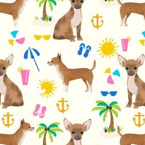 chihuahua beach cute dogs dog pet dog beach fun cute chihuahuas