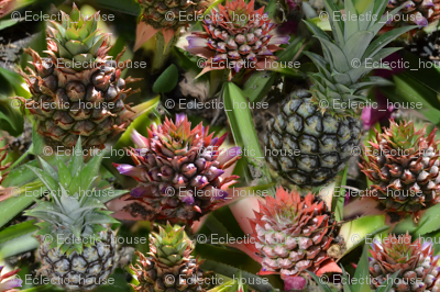 Rpineapple_flower_to_fruit_preview