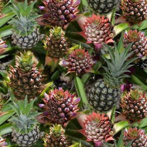 Pineapple Flower to Fruit