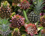 Rpineapple_flower_to_fruit_thumb
