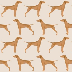 vizsla dog cute pet dog fabrics sweet dogs