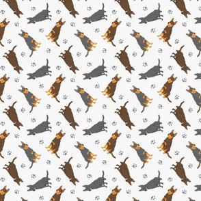 Tiny Australian Kelpies - gray