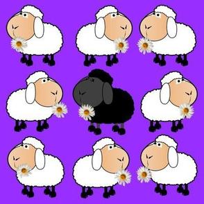Chamomile Sheep