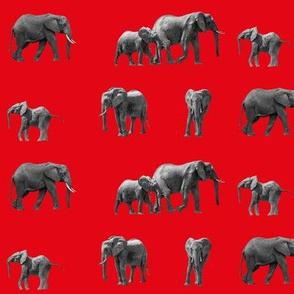 Elephants_red