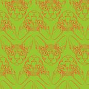 Sphynx lines in  lime green & orange