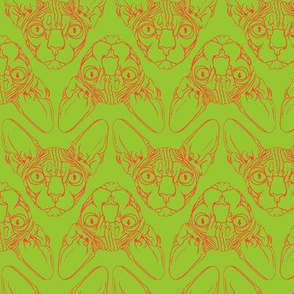 Sphynx lines in  lime green & orange