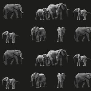 Elephants_black