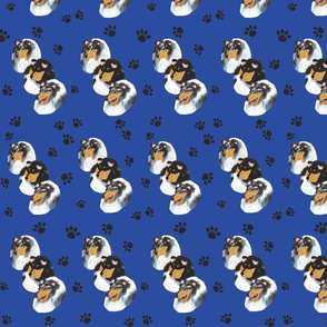 Collies with blue background with paw prints