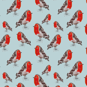 Scarlet Robin Birds on Pale Blue
