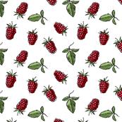 Raspberry, on white