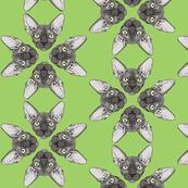 Sphynx grey with Green eyes - green background