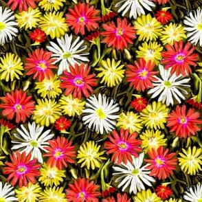 Ice Plants in Flower